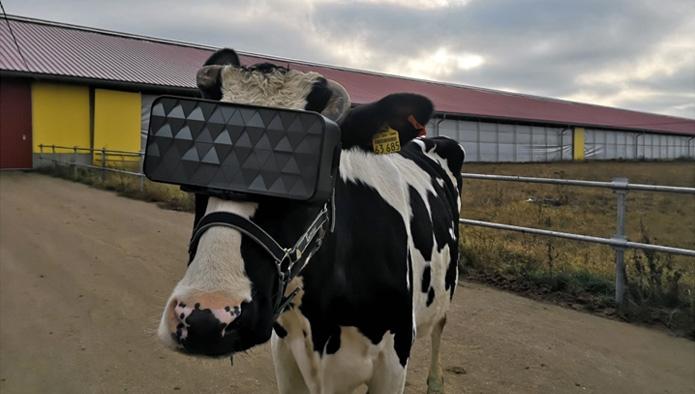 Jobban tejel a virtuális valóság - de nem úgy, ahogy gondolnád
